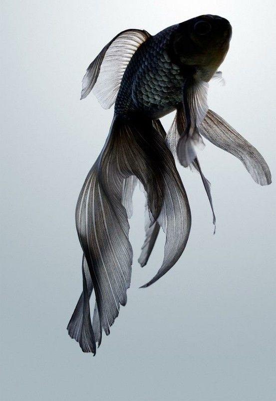 """Blach Fish"""