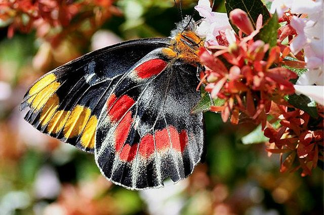 Image detail for -35 Most Beautiful Butterfly Pictures | Incredible Snaps