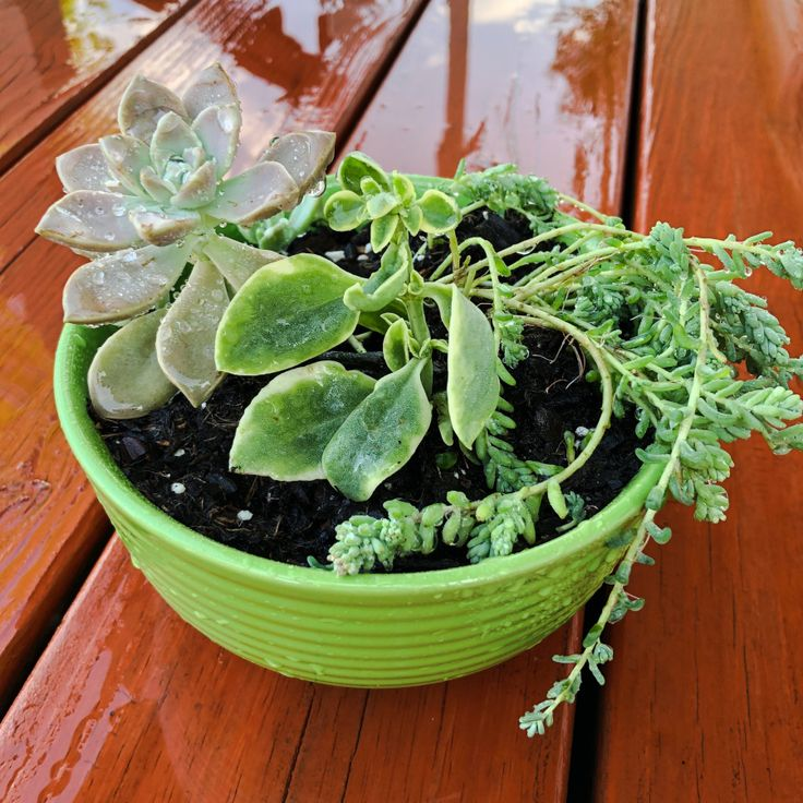 How to Make a Mini Succulent Garden – Straightaway Craftsdiy