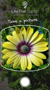 NUOVO POST: Like That Garden Se avete un po' di difficoltà a riconoscere le varie specie di piante, questo articolo fa proprio al caso vostro!