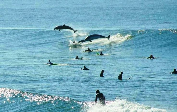 Delfines en la Playa de san Lorenzo, Gijón