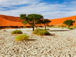 Help students locate information on deserts through lesson plans, books, articles, and activities.