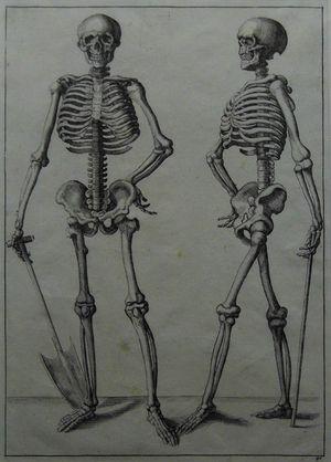 [Skeleton] after Andreas Vesalius