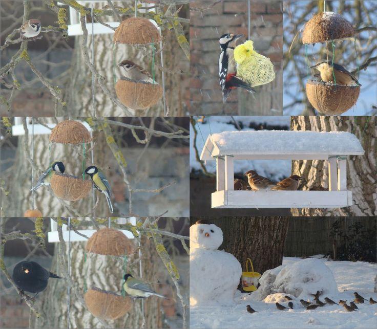 Příkrm drobného ptactva v zimě