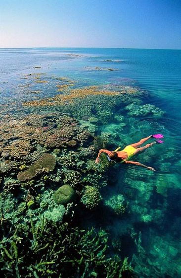 The world's largest coral reef system, the Great Barrier Reef #Australia is a vast, kaleidoscopic underwater wonderland, stretching some 2300km along the east coast of Queensland. Home to a dazzling array of fish species, and hundreds of types of coral, sponges and molluscs, snorkelling and diving doesn't get much better than this.