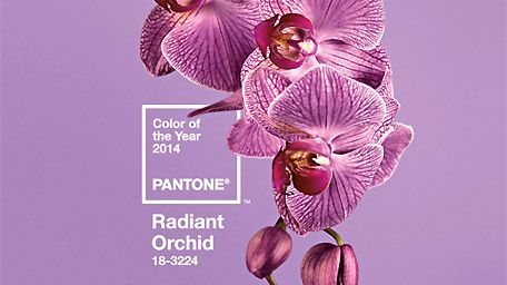 Pantone's colour of the year is Radiant Orchid!