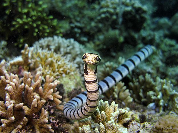 Banded Sea Krait | 15 Terrifying Creatures From The Ocean