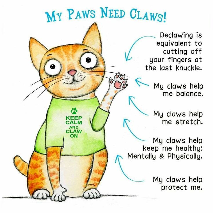 Pin by Linda Kortright on Everything Cats! Paws and