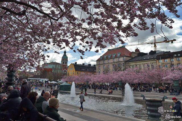 Direction: Sweden!: Dzień kwitnących wiśni