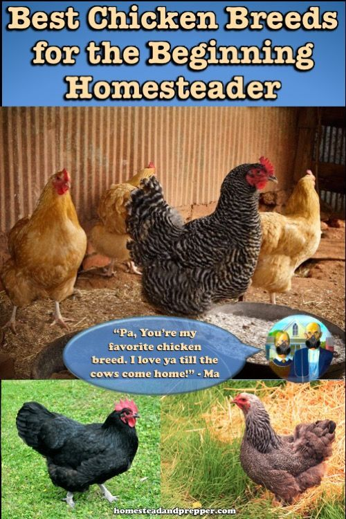 As it turns out, not all chickens are created equal