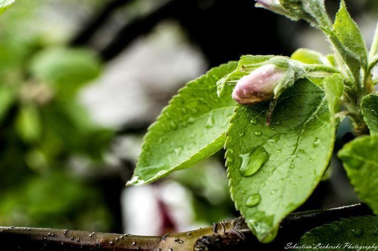 drop  water by Sebastian Lacherski on 500px