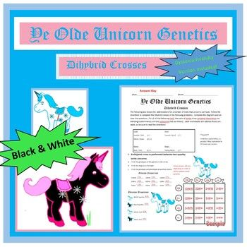 Unicorn Genetics: Dihybrid Crosses (F1 Dihybrid Cross) Worksheet/Activity - This activity in heredity includes two dihybrid crosses for students to complete for four different autosomal traits showing complete dominance. A dyslexia-friendly version of both the worksheets and the answer key is also included for dyslexic students and teachers!