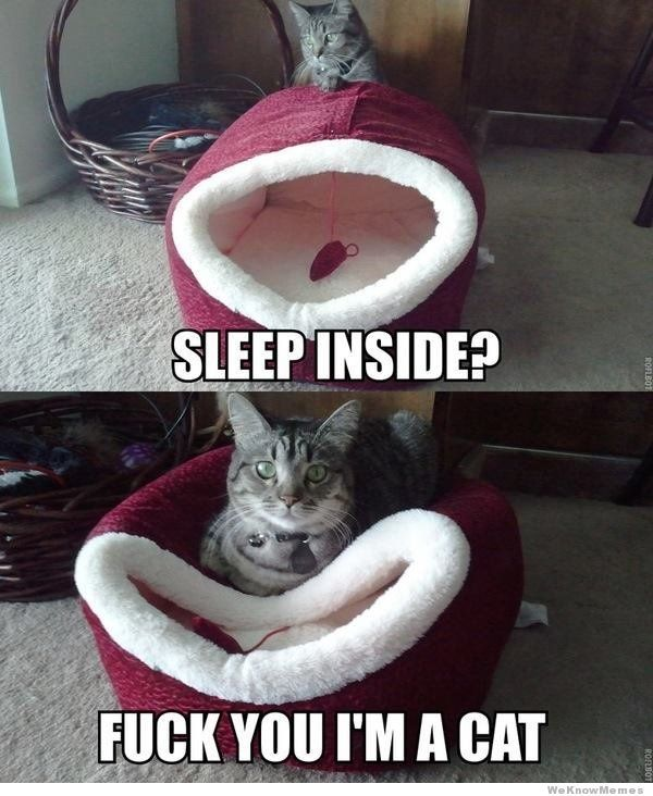 Hahahaha: Cat Beds, Sleep Inside, Cat Logic, Funny Cat, Funnycat, Funny Stuff, Humor, Kitty, Animal