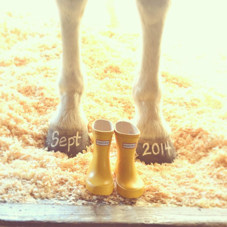 Our Baby Announcement :: World's Best Horse & Toddler Hunter Boots