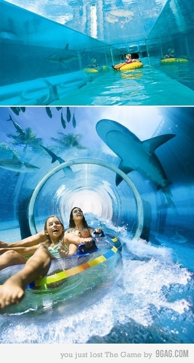 oh this is just awesome!Buckets Lists, Paradise Island, Sharks Tanks, The Bahamas, Places, Water Sliding, Paradis Islands, Water Parks, Atlantis