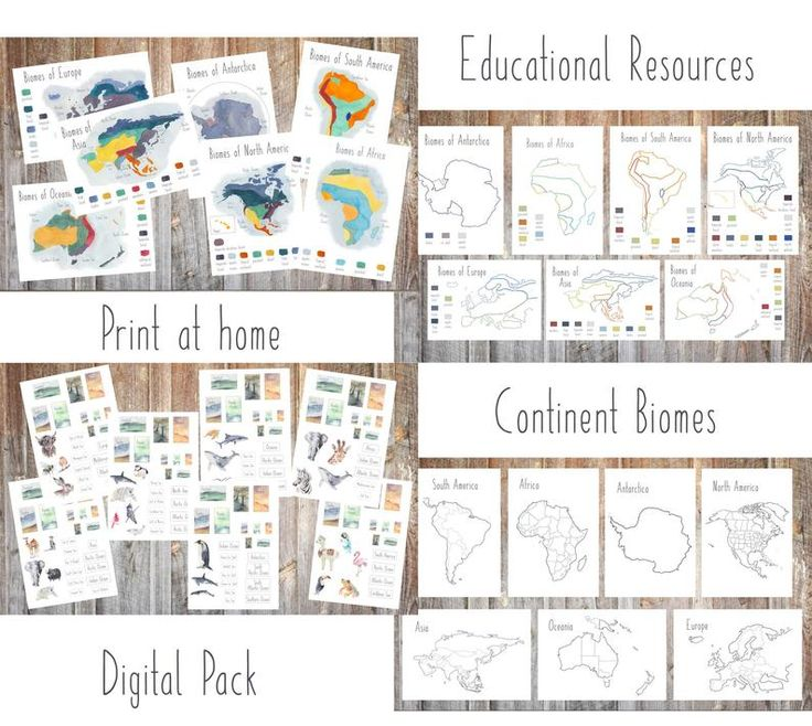 Continent biomes map, geography cards, biomes map ...
