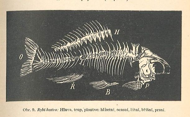 Rybářský sport : chytání ryb na udici ... jakož i návod ku lovení a hypnotisování raků