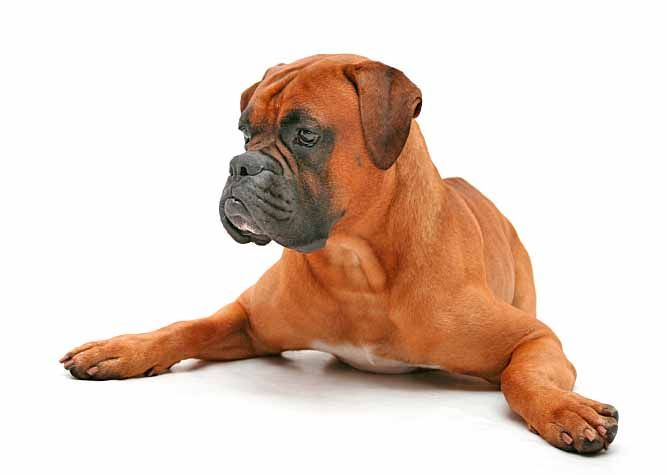 analysis of a dark brown dog View essay - literary analysis a dark brown dog emdocx from english 2322 at eastlake high school martinez 1 evelyn martinez mr chavez english 1301 6th period 24 september 2016 a dark.