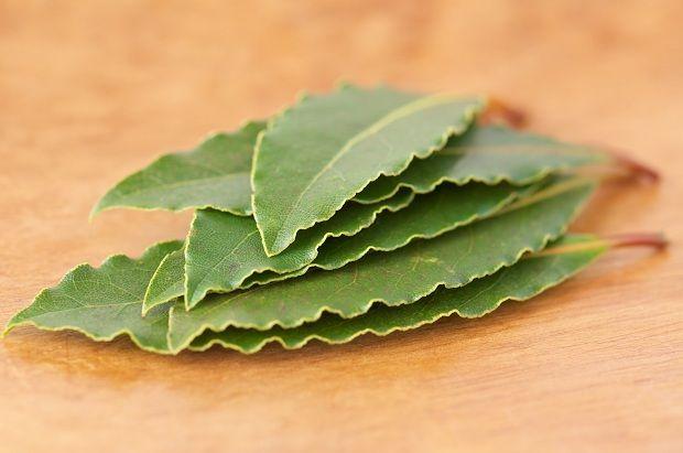 Defnenin Marifetleri    Defne kışın yapraklarını dökmeyen şifalı bir ağaçtır. Özellikle ağrı kesici ve doğum kolaylaştırıcı olarak çok faydalıdır. Hamileliğin son haftasında kullanılır.    Kullanılışı; Defne tohumu öğütülüp  balla karıştırılıp macun yapılarak doğuma 1 hafta kala günde 3  çay kaşığı yenirse doğumu kolaylaştırır ve sancıları hafifletir.  Bu macun aynı zamanda nefes darlığı, öksürük, vücut ağrısı, baş ağrısı gibi ağrılarda çok faydalıdır.