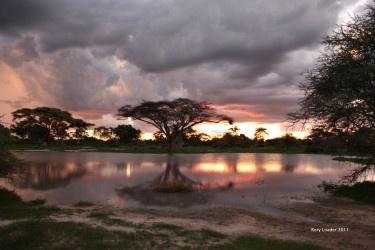 Iconic Africa. Taken at Martial eagle pan Chiefs Island Botswana.
