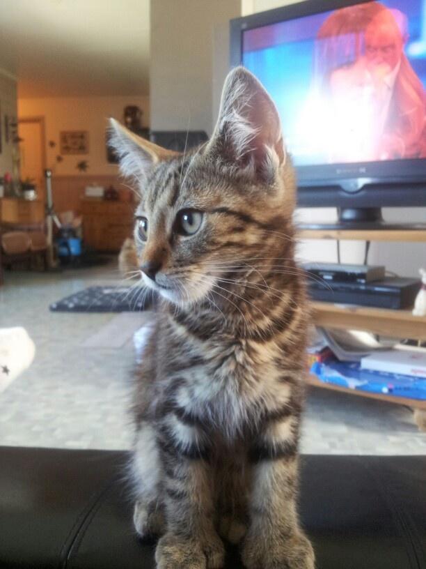 Kitten :-)