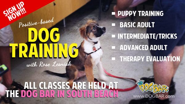 Dog Training And Puppy Obedience Classes in Miami Beach | Miami Florida's original pet supply boutique for holistic dog food, dog grooming, ...
