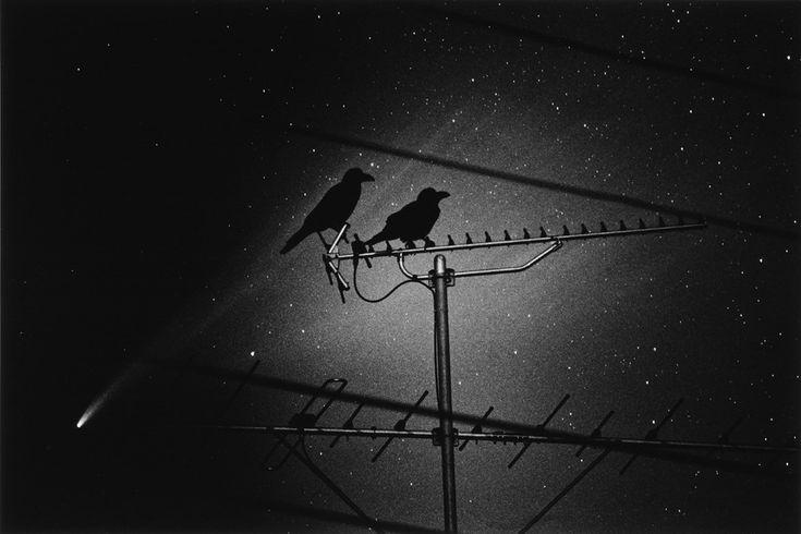 The Last Cosmology, Kikuji Kawada, Die Ganze Stadt, Zeno & Kiki, 1995