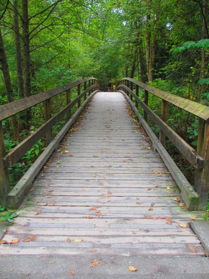 The Bridge of Life