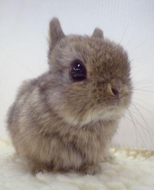 fluffy baby bunny - photo #1