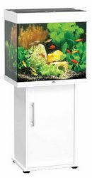 Juwel Lido 120 in White is a great aquarium for first time fish lovers with its cubed design and holding up to 120 litres (hence the name 120). You will be able to hold many fish in this tank.  The Juwel Lido 120 in white also comes at a great price with many offers about. Check out the full review with Pawsify and save - http://www.pawsify.co.uk/articles/juwel-lido-120-aquarium-fish-tank/
