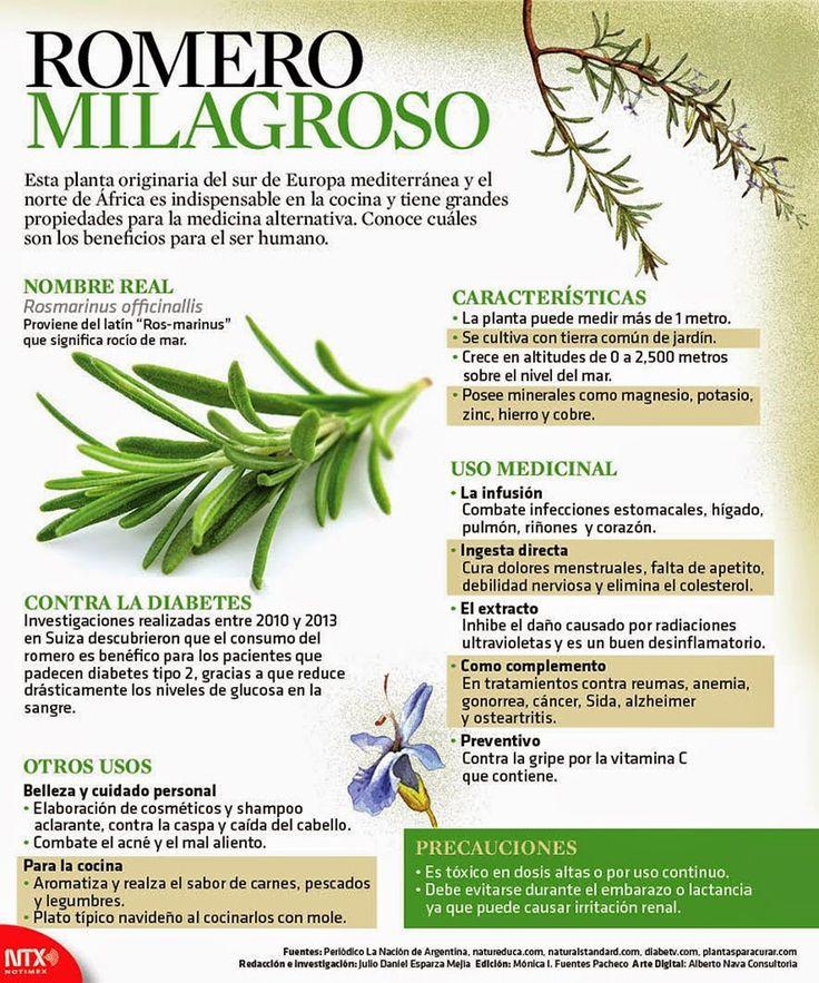 El romero (Rosmarinus officinalis) es una hierba perenne muy  fragante originaria del Mediterráneo, conocida por ser un sabroso condimento culinario, como ingrediente de perfumes corporales, y por sus posibles beneficios para la salud.