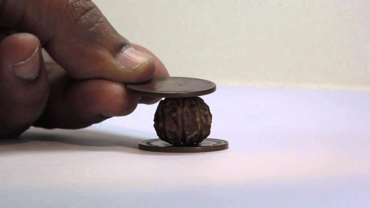 Myths vs facts about rudraksha 1 : Copper coin test Copper coin test is the most commonly used practice to check the authenticity of rudraksha. But the fact is, it is not the genuine test to check the authenticity of rudraksha.Here, Mr. Tanay Seetha (founder of rudralife) will explaine you in detail with example. See the video to know more... www.rudralife.com