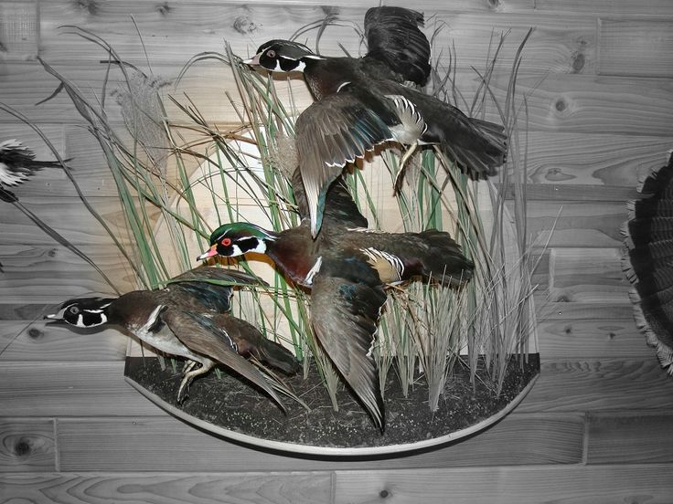 Lovely Duck Hunting Wall Murals · Beautiful Duck Hunting Wall Murals Part 19