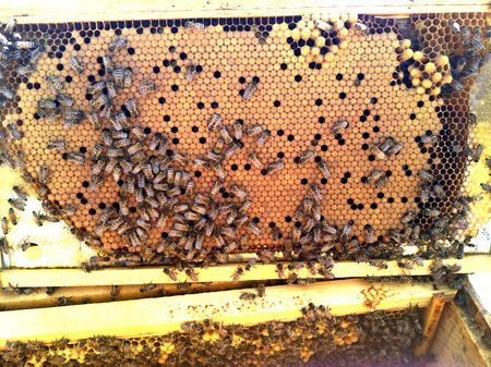 41 best Beekeepingzzzzz images on Pinterest Bees, Honey bees and - fresh apiary blueprint examples