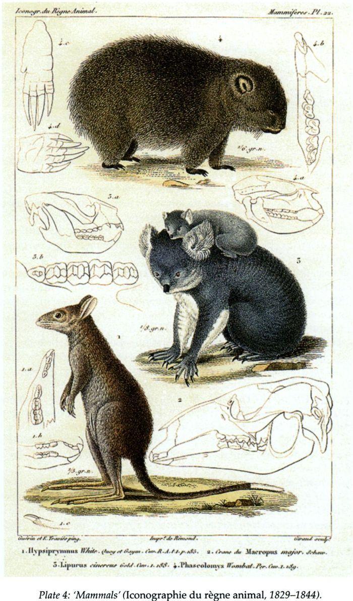 Plate 4: 'Mammals (Iconographie du règne animal, 1829-1844). [print]