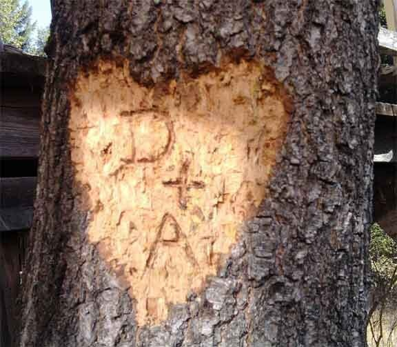 ROMANTIC GESTURE: A classic showing of affection - carving your and your sweethearts initials into a tree. Timeless and beyond adorable romantic gesture. Even more romantic if it is carved into one of your and your spouse's backyard trees so you can always easily go back to look at it. ~something I'd love to do with you, Hunny~