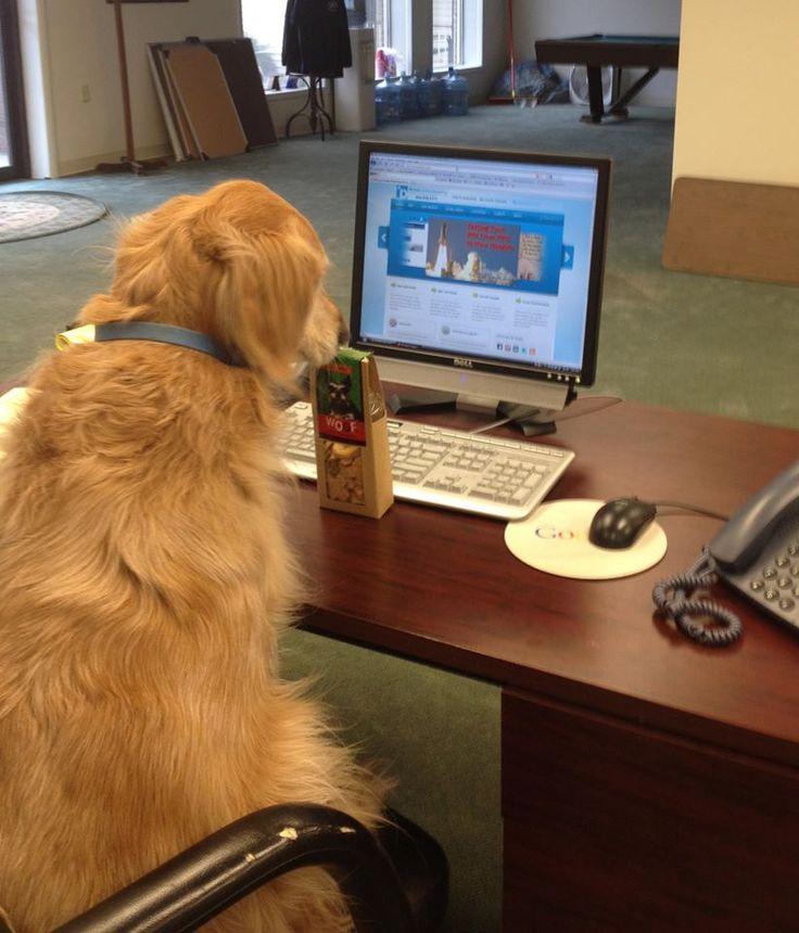 SEO Dog hard at work!