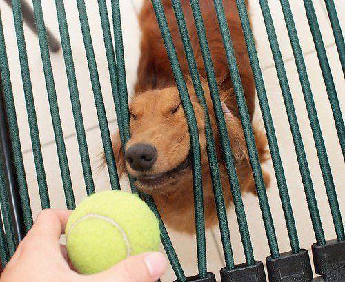 Must Get Ball!
