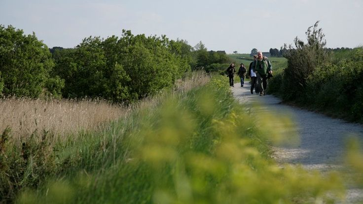 Visitors walking along the West Bank footpath, RSPB Titchwell Marsh