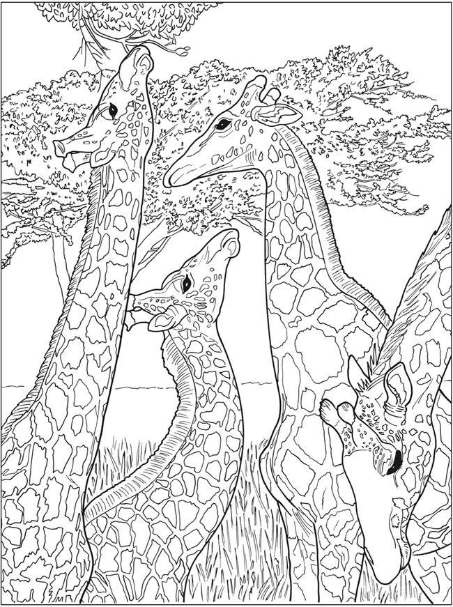 - Creative Haven Beautiful Nature Designs Coloring Book -- 6 Sample Pages  Designs Coloring Books, Coloring Book Art, Giraffe Coloring Pages