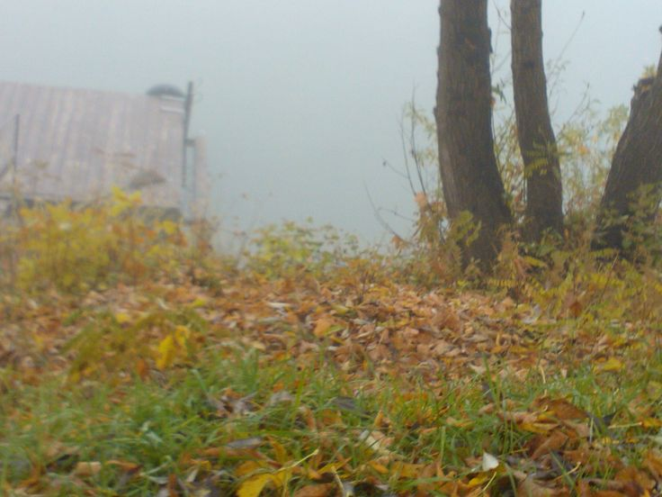 Tisza in autumn