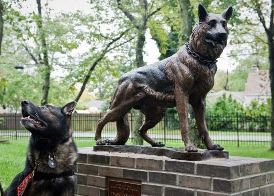 Statue at the Lindenhurst Remembers 9/11 Memorial Garden in Lindenhurst, NY honoring the 300 or so dogs used in the search efforts. The statue is modeled after a search dog named Hansen, who spent 150 days at the World Trade Center Site with his handler, NYPD K9 Officer Steve Smaldon, searching for victims. Photo credit: Steve Pfost