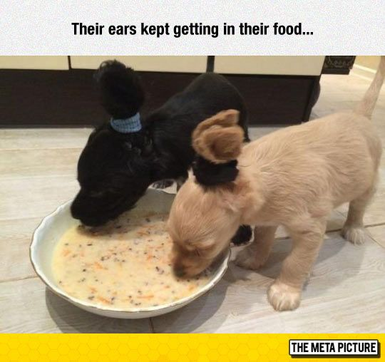 I laughed way more than necessary | Funny Puppies