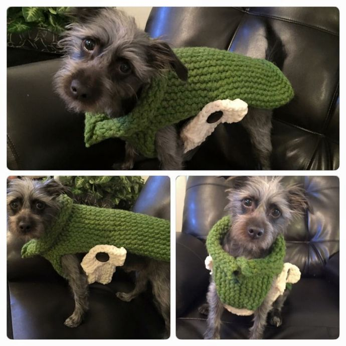 Loom knitted dog sweater by Noel M.