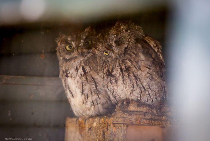 Owls https://flic.kr/p/y4gmeM