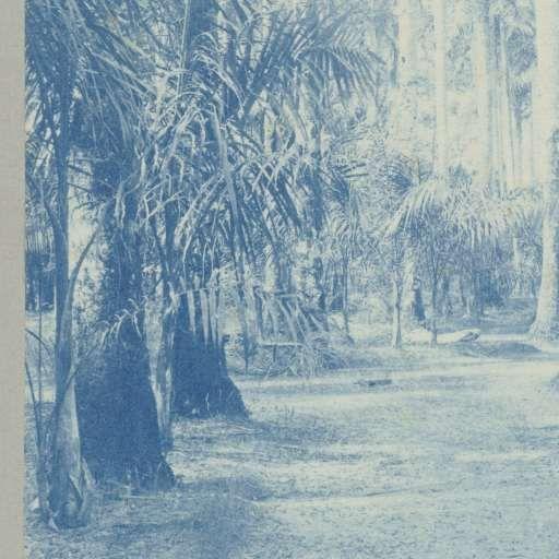Palmentuin, Paramaribo, attributed to Hendrik Dooyer, 1906 - 1913 - Muurbehang-Collected Works of Florentine Six - All Rijksstudio's - Rijksstudio - Rijksmuseum
