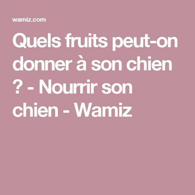 Quels fruits peut-on donner à son chien ? - Nourrir son chien - Wamiz