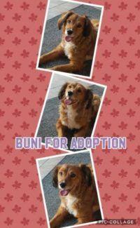 Buni for Adoption | Florina's Doggy Rescue House