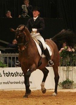 Midt-West Ibi-Light DVE 360 Årets Hingst 1999  Midt-West Ibi-Light DVE 360 og Margit Ørum Midt-West Ibi-Light DVE 360 og Margit Ørum Midt-West Ibi-Light er tildelt opdrættermedalje i guld og fortjenstemedalje i guld af Dansk Varmblod. Han vandt Aage Ravns Vandrepokal for bedst 4 års Dansk Varmblods avlede hingst i 1989 og han blev udnævnt til elitehingst i 1995 og vandt Prinsesse Benediktes Vandrepokal i 2005. Han har mange internationale sejre i Grand Prix Dressur og var kvalificeret til