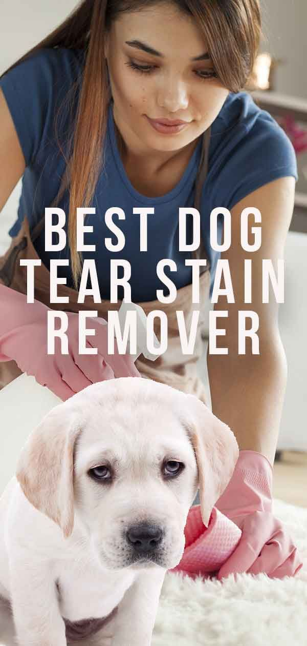Best Dog Tear Stain Remover For Clean And Clear Fur Dog Tear